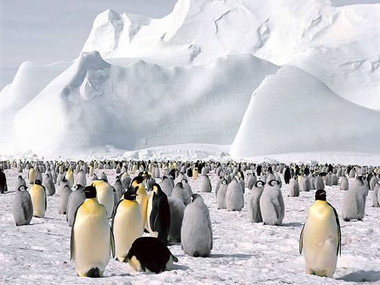 frozen-planet-penguins-excursion