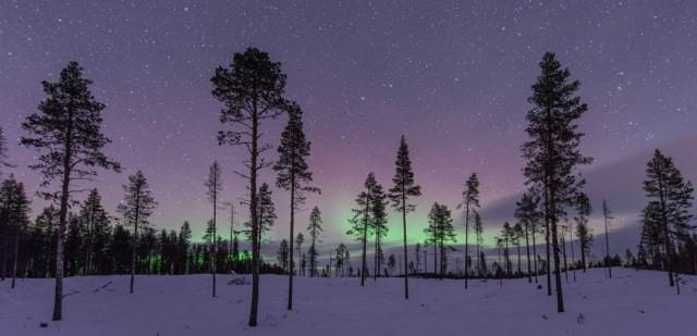 aurora-behind-the-trees