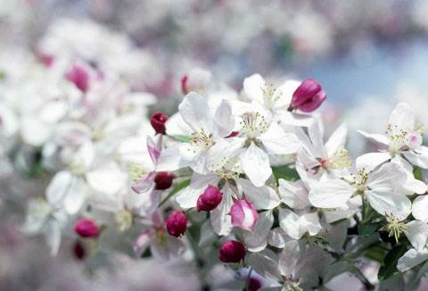 Springtime-Competition