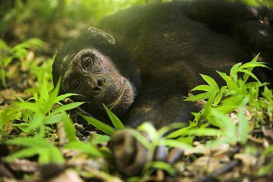ape-photography-safari