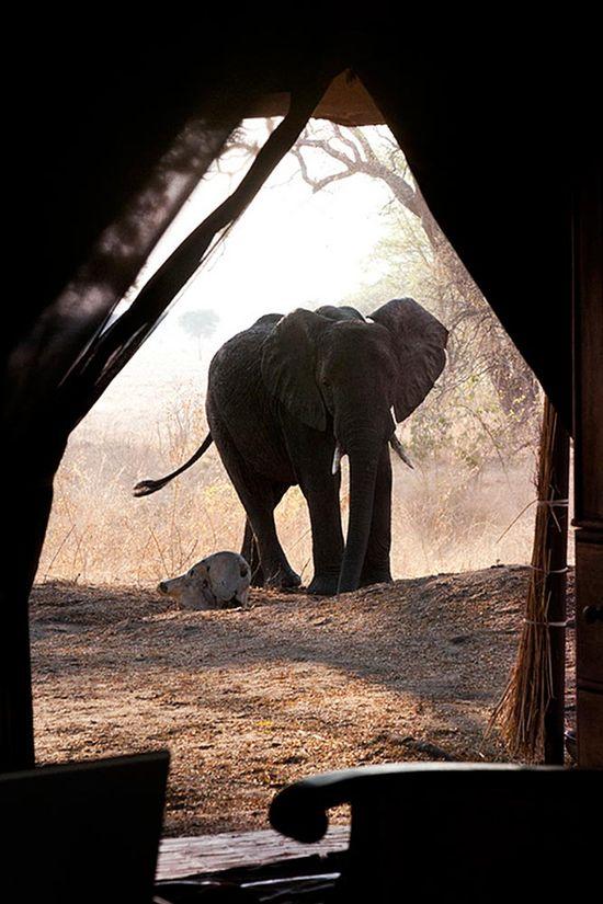 elephant-photography-safari