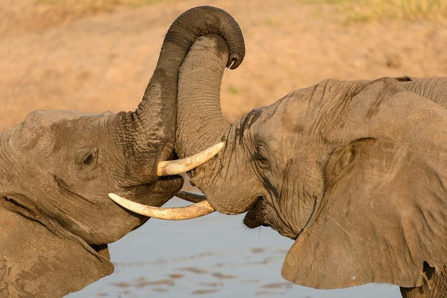 Elephants_photography_competition