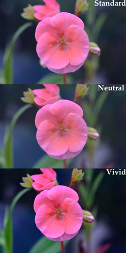 Std-Neutral-Vivid
