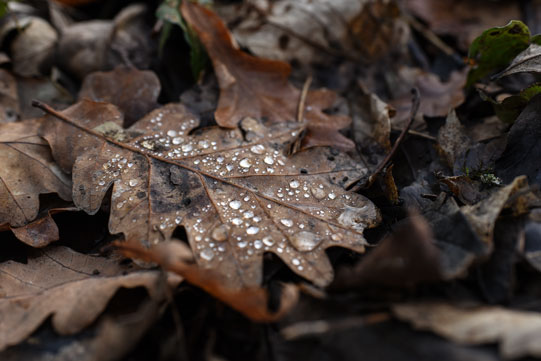 leaf-beckydanese