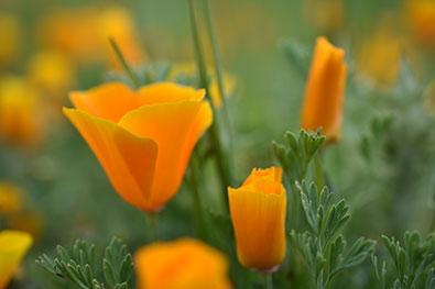 D3400 sample image courtesy of Nikon USA