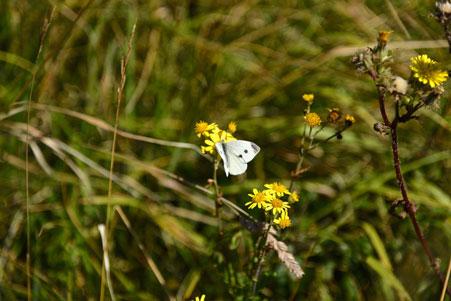 nikon-d750-butterfly